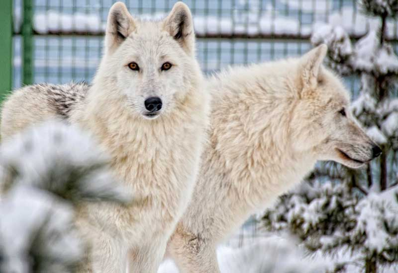 Долина волков